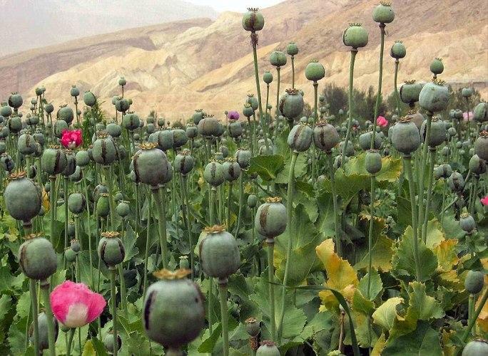 Afghanistan 16