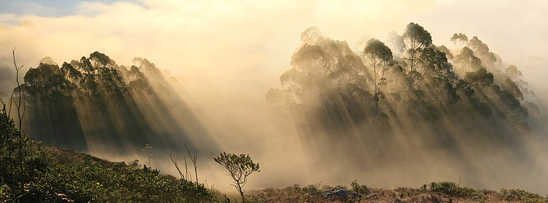More crepuscular rays from Marin County, Wikimedia photo by Mila Zinkova
