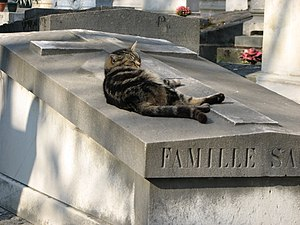 A cat on a grave in Pere Lachaise Cemetery