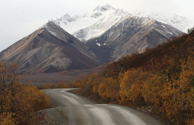 File:Denali road and snow covered mountains.jpg