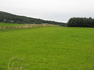 English: Green, green grass at Damhead