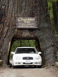 2005 The Chandelier Tree