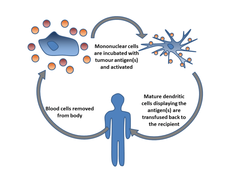 File:Dendritic cell therapy.png
