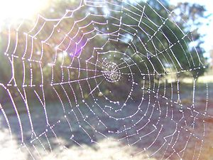 """Imagine a multidimensional spider's web ..."