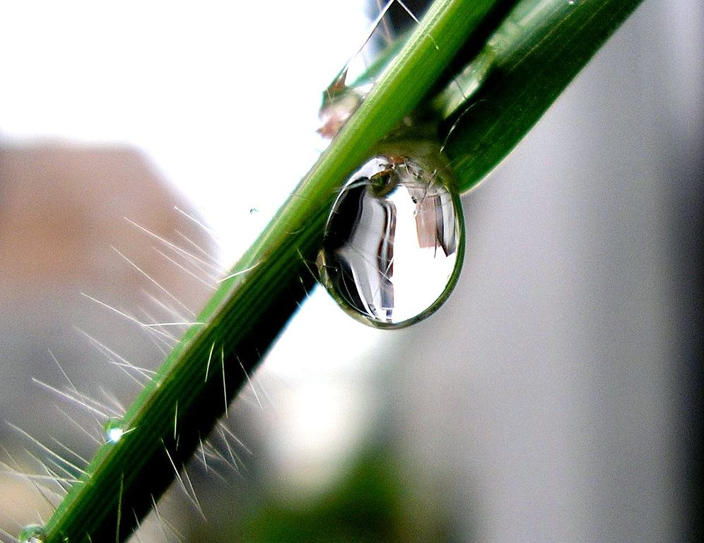 A water droplet on a plant stem.