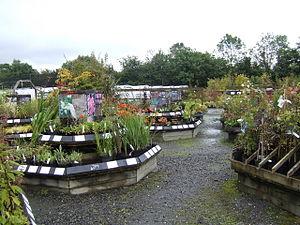 Plant display at Farmyard Nurseries A speciali...