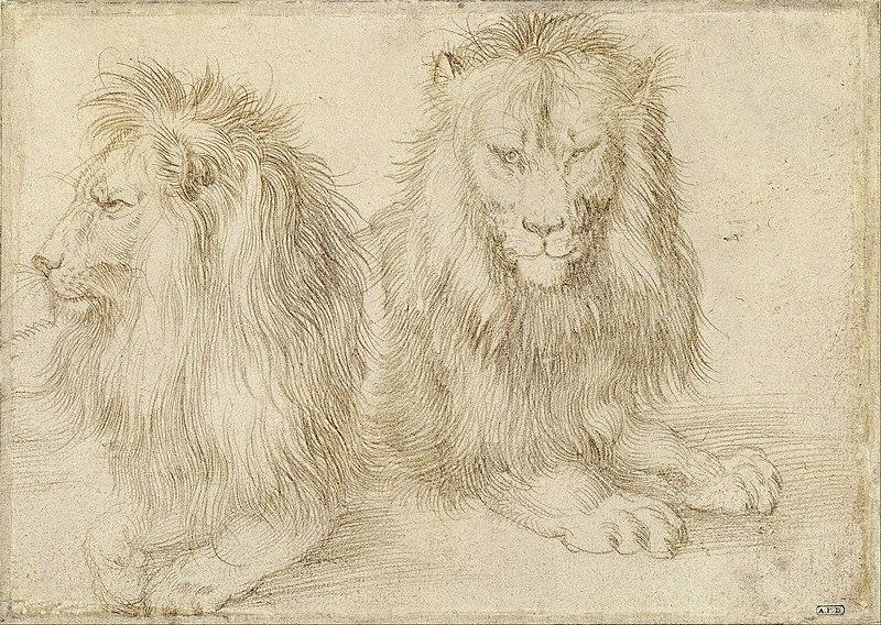 File:Albrecht Dürer - Two seated lions - Google Art Project.jpg
