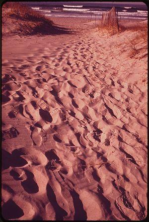 TRACKS ACROSS SAND DUNE - NARA - 547607