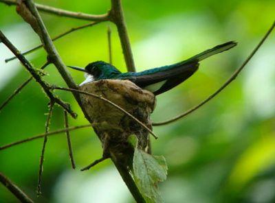 Mommy bird on nest