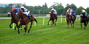 Horse racing in Sligo, Ireland