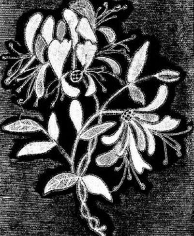 Honeysuckle sprig of modern honiton