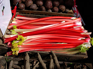 Rheum rhabarbarum - Rhubarb