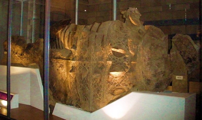 File:Scolosaurus cutleri.JPG