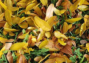 An autumn ground with fallen leaves and grass