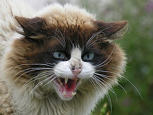 Cat in Barraña, Boiro, Galicia