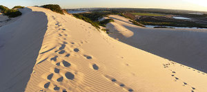 Sand Dunes in the Sutherland Shire, New South ...