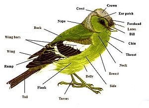 Anatomy of a typical bird