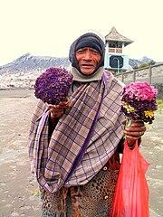 Anaphalis javanica (Javanese Edelweiss) dijual oleh warga Bromo setelah diberi warna.