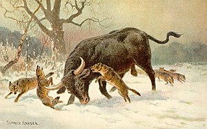 Long Horned European Wild Ox (aurochs)