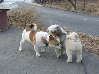 https://i1.wp.com/upload.wikimedia.org/wikipedia/commons/thumb/2/28/Twodogs_sniffing.jpg/320px-Twodogs_sniffing.jpg