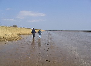 English: Walking on the beach Looking along th...