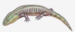 Apachesaurus gregorii, image from Wikipedia.
