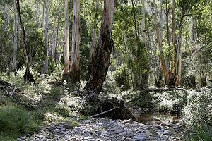 The Australian bush, a major influence and cen...