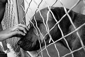 Dog at animal shelter