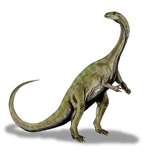 Massospondylus carinatus, a prosauropod from t...
