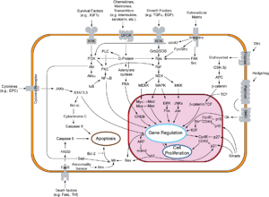 Overview of signal transduction pathways invol...