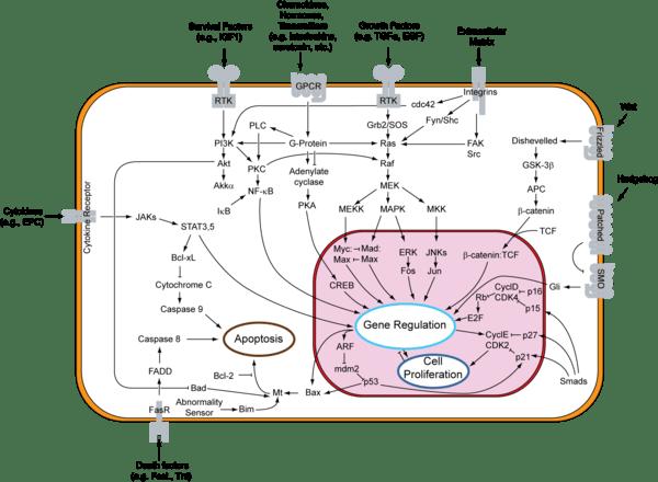 Anti Pancreatic Islet Cells