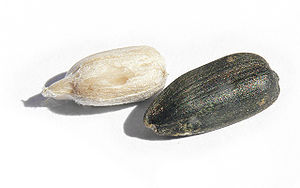 Sunflower seed. Whoe seed (right) and just the...