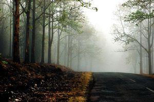 English: Fog in Wayanad