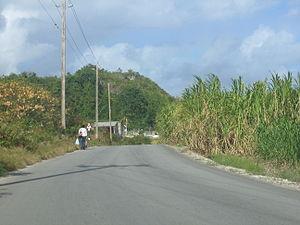 A pedestrian walks along a remote road lined w...