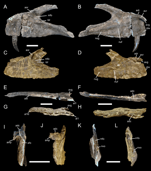 File:Torvosaurus.png