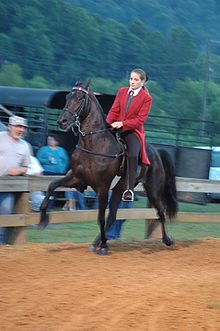 Tennessee Walking Horse Wikipedia