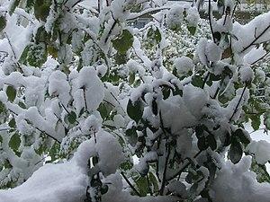 Some Snow Dec 2005