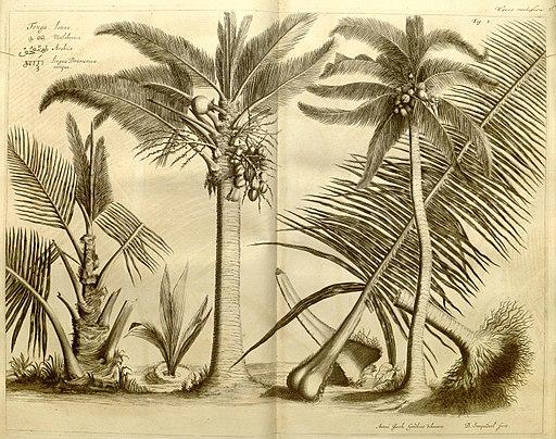 Hortus Indicus Malabaricus (Fig. 1) BHL463570