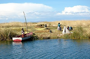 "Uros people harvesting some ""totora""..."