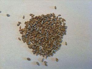 Anise seeds Français : Graines d'anis