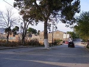 Solitaire tree in Slazar Street, Saltillo, Sta...