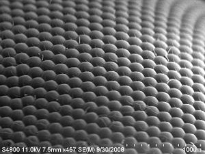 An image of a house fly eye surface by using S...