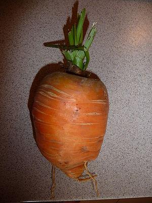 Fat carrot