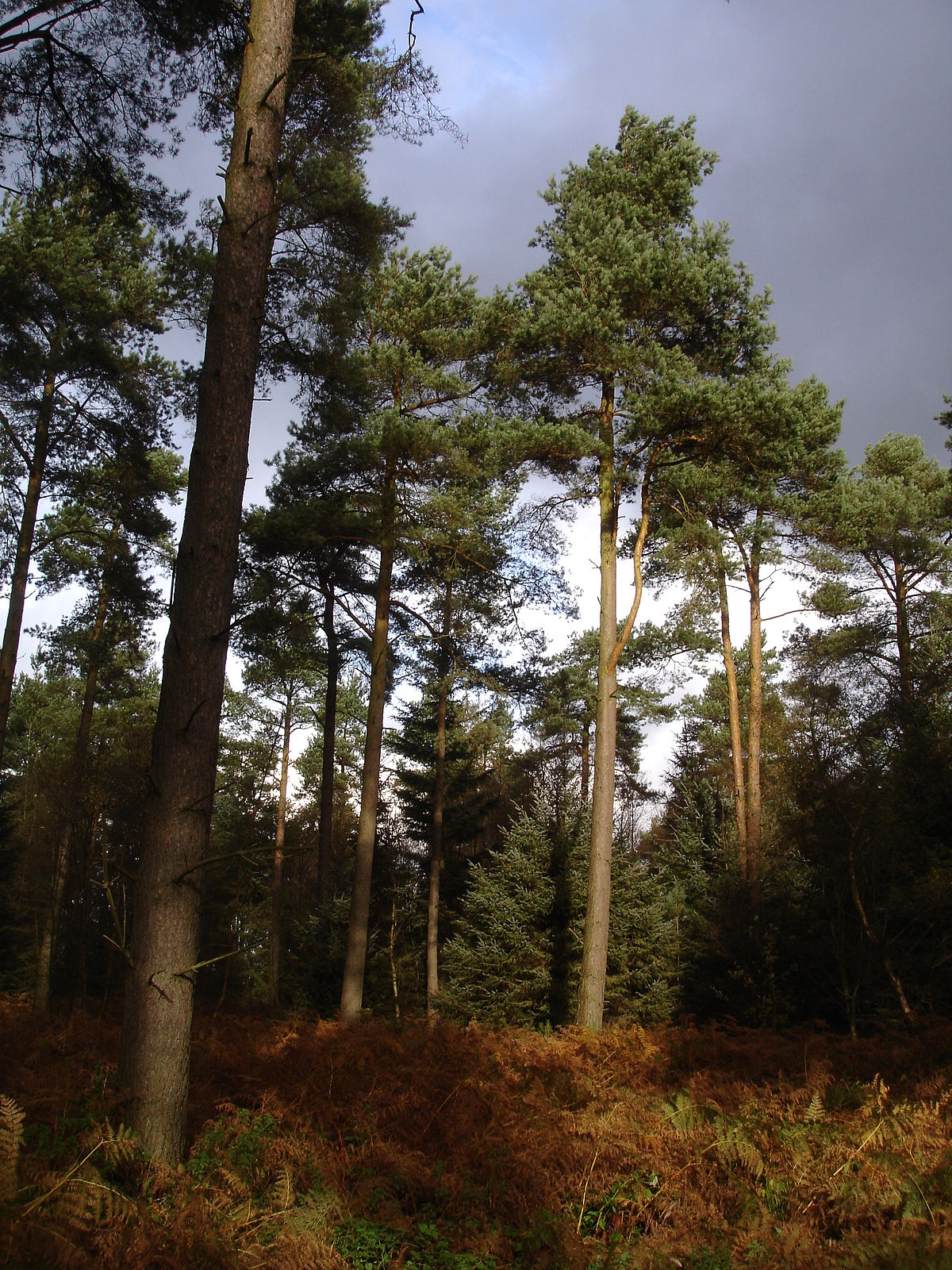Dalby Forest Wikipedia
