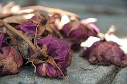 Flickr - Whiternoise - Dead flowers, Pére Lachaise Cemetery