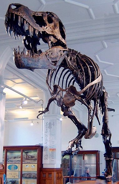 381px Stan the Trex at Manchester Museum গাণিত নিয়ে মজার রসিকতা | Techtunes