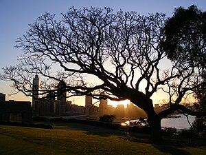 Sunrise over King's Park, Perth. Western Austr...