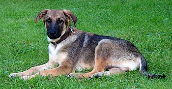 This image shows a young mixed-breed dog. The ...