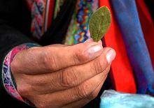 A Bolivian man holding a coca leaf.