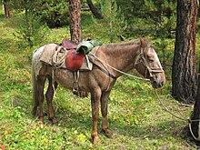 harnachement du cheval wikipedia